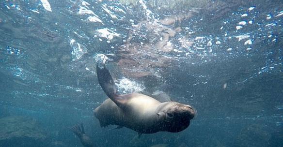 Urlaubsgruß von den Galapagos Inseln