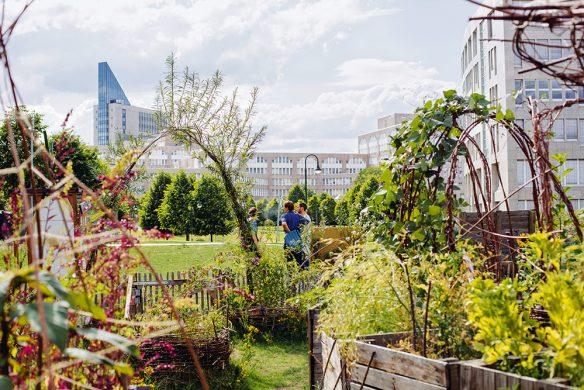 Urban-Gardening_Düsselgrün-584x390